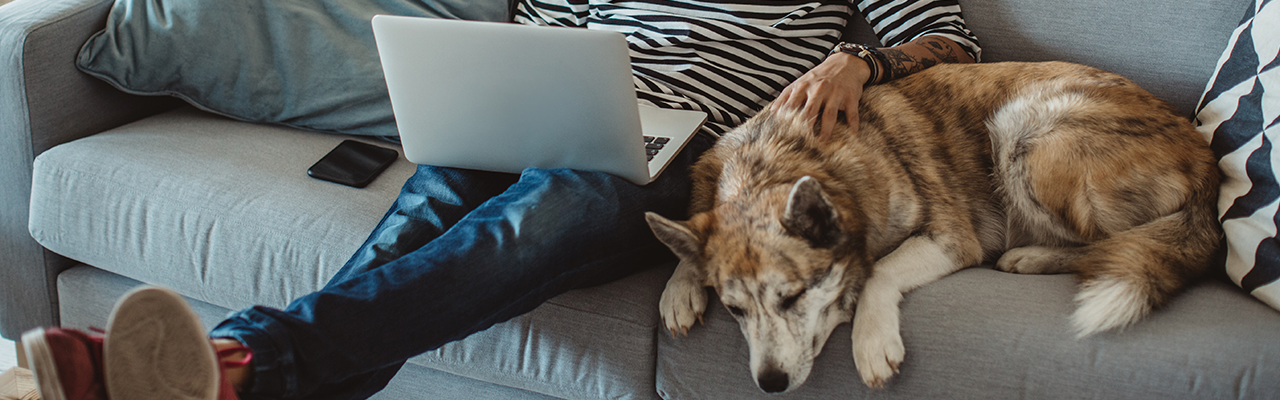 man on couch, petting his dog and using laptop